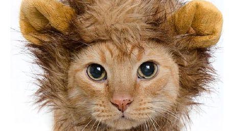 Lví hříva s ušima pro kočky