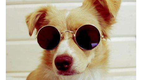 Sluneční brýle pro čtyřnohé mazlíčky