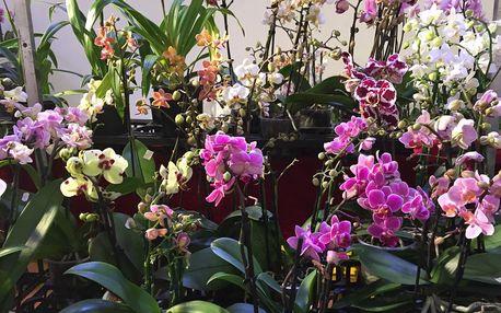 Výstava orchidejí a Drážďany