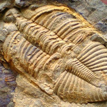 Za tajemství zkamenělin: 2x vstupenka na výstavu