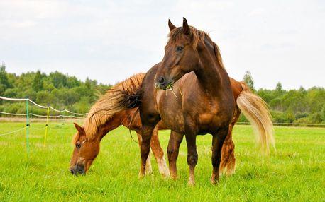 Pobyt v prírode Malej Fatry s jazdou na koni