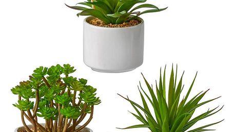 Rostlina Umělá Helena