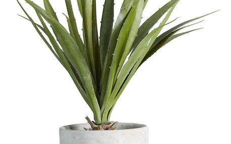 Rostlina Umělá Agave