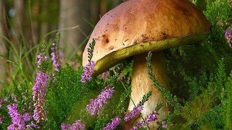 Vysaďte si na zahrádce své vlastní houby. 2 sady hub za jedinečnou cenu. Jednoduchá výsadba.