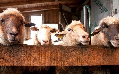Pobyt na ekologickej farme Gazdovský Dvor v Malej Fatre
