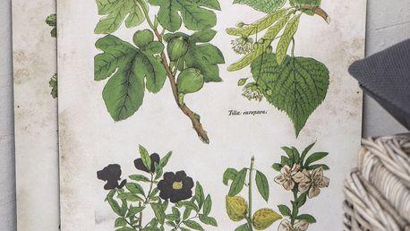 IB LAURSEN Botanický obraz Fig and fruits 46x60 cm, zelená barva, krémová barva, papír, dřevotříska
