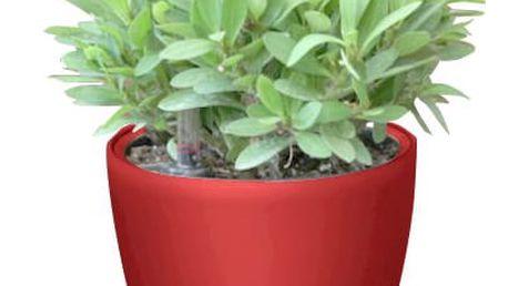 G21 Ring mini Samozavlažovací květináč červený 15cm