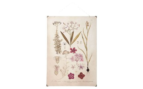 IB LAURSEN Botanický obraz Pink flowers 50x70 cm, růžová barva, krémová barva, papír, dřevotříska