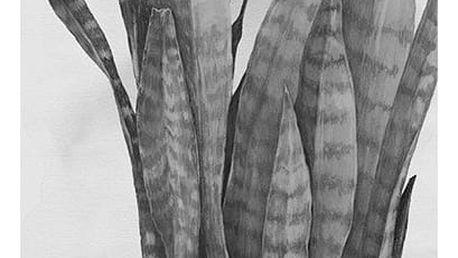 Magdalena Tyboni DESIGN Plakát Plant 30x40 cm, šedá barva, černá barva, bílá barva, papír