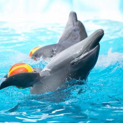 1denní Norimberk s návštěvou ZOO a delfinária pro 1 osobu