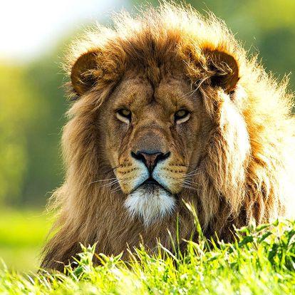 Nakrmte si krále zvířat: Unikátní rodinný pobyt