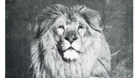 Šedá rohožka Mint Rugs StateMat Lion,50x70cm