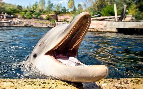 Výlet do Norimberku a zoo s delfináriem dne 25.8.