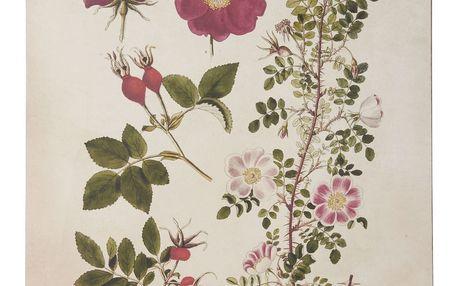 IB LAURSEN Botanický obraz Roses 50x70 cm, červená barva, růžová barva, zelená barva, krémová barva, papír, dřevotříska