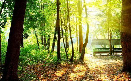 Pobyt v Českém lese s polopenzí i wellness