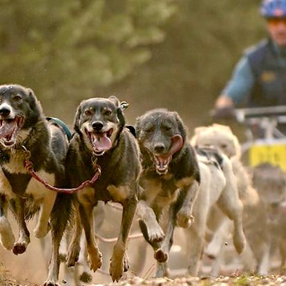 Jízdy se psím spřežením až pro 2 osoby