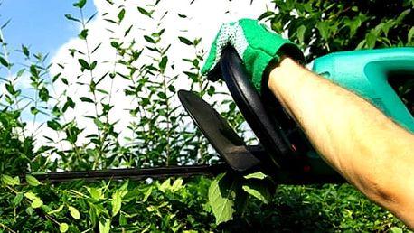 Živý plot z habru. 40 ks ve velikosti 120 cm. Nenáročné na údržbu, hustá a rychle rostoucí dřevina.
