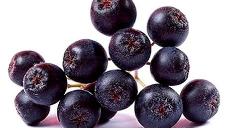 Velká ovocná sada keřů 7 kusů + 1 zdarma, borůvky, dřín, černý jeřáb, ostružiny aj.