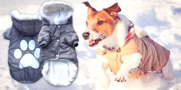 Hřejivé oblečky pro vaše malé psí kamarády