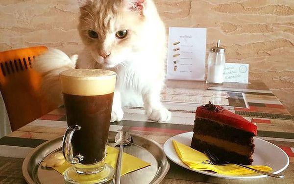 Čauky Mňauky Cafe