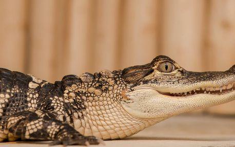 Krokodýlí Zoo Praha: poznejte plazy naživo