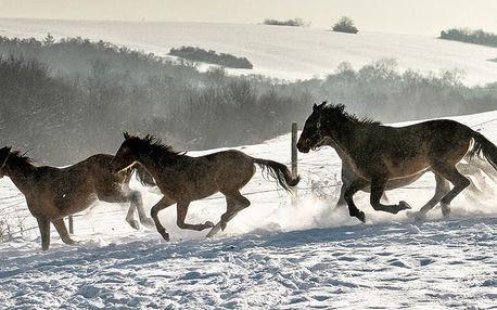 Slovensko: pobyt na 3-4 dny pro dva v koňském areálu