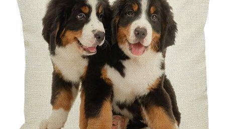 Povlak na polštář - Bernský salašnický pes