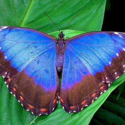 Vstup do tropické zahrady s exotickými motýly