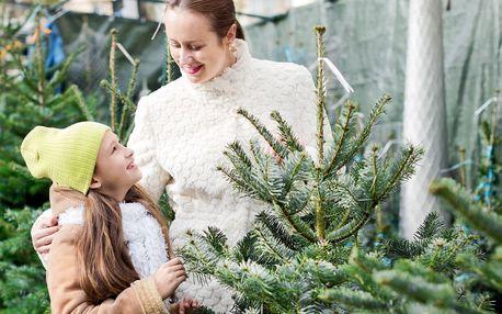 Voňavý symbol Vánoc: až 225 cm vysoká živá jedle