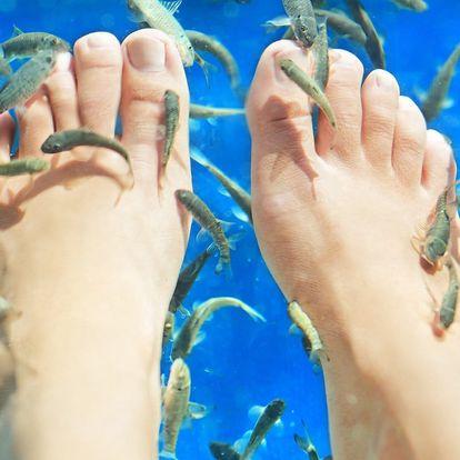 Relaxační koupel nohou s rybkami Garra Rufa