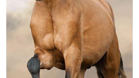 Jerry Fabrics Osuška Horse brown, 10 x 140 cm