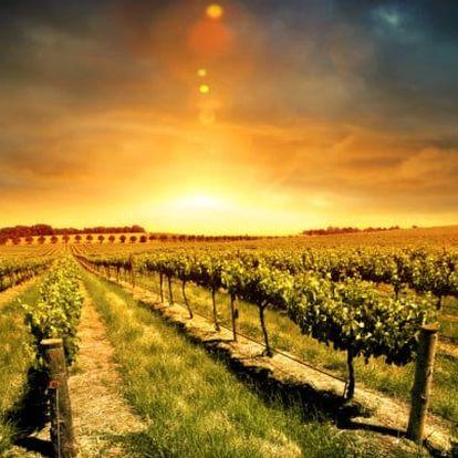 Slovácko s řízenou degustací ve vinařství