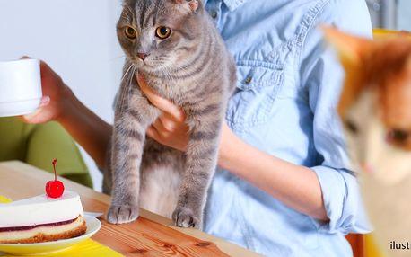 Otevřený dárkový voucher do kočičí kavárny