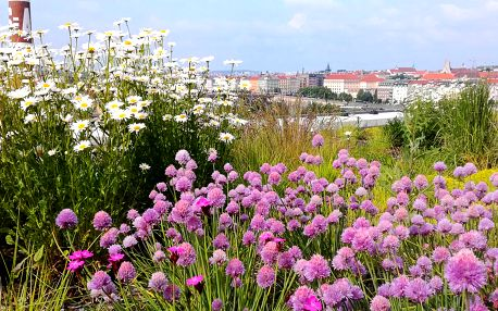 Zkrášlení zahrady: konzultace i kompletní studie