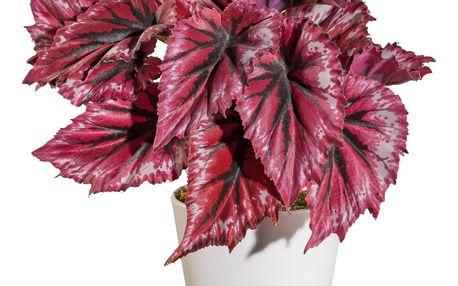 Umělá Begonie v květináči červená, 25 cm