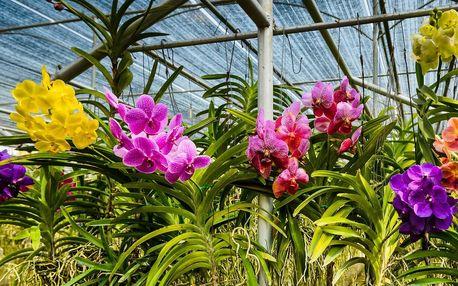 Vyrazte ve dvou do botanické zahrady