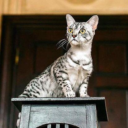 Vstupenky na výstavu koček a kočičí kalendář 2019