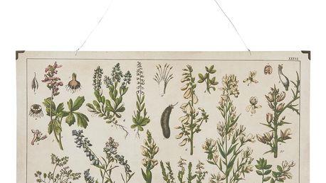 IB LAURSEN Botanický obraz Legume 60 x 40 cm, multi barva, dřevo, kov, papír