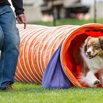 Výcvik a sporty pro psí miláčky: 2 a více lekcí