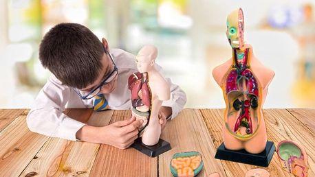 Jak funguje člověk: modely lidského těla