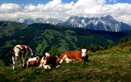 Alpské vandry