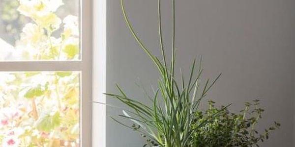 KETER COZIES Trio květináče 3ks, 15,5 x 15,5 x 10,5 cm, fialová, modrá, šedá2