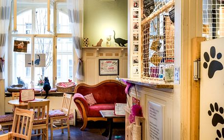 20% sleva na kávu a dort v první kočičí kavárně v Praze na Žižkově