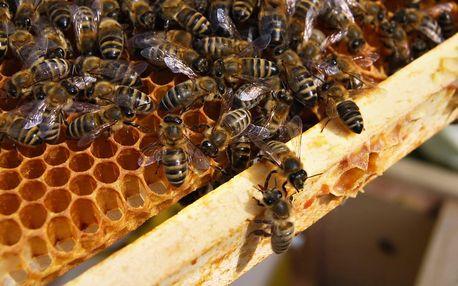 Včelí farma: exkurze a výroba svíček pro 2 i rodinu