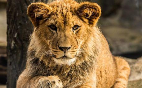 Jednodenní fotokurz v zoo: Olomouc nebo Zlín