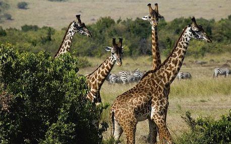 Keňa - KEŇA: Po stopách žiraf 7 dní / 6 nocí na 7 dní, plná penze s dopravou letecky z Prahy