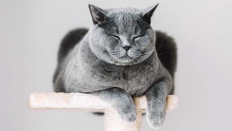 Velká škrabadla pro kočky v několika provedeních