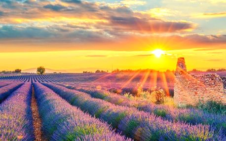 To nejlepší z Provence – Monaco, Cannes, Canyon Verdon, Camargue s levandulovými poli, Provence, Francie