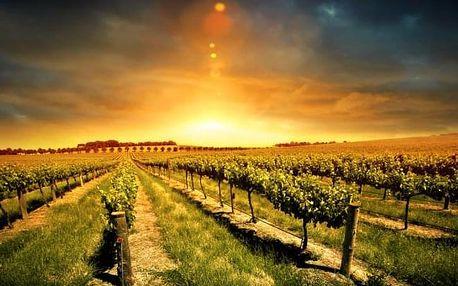 Slovácko: pobyt ve Vinárně u Tesařů s polopenzí a moravským vínem
