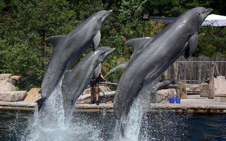 Delfinárium a ZOO v Norimberku | Jednodenní poznávací zájezd do Německa